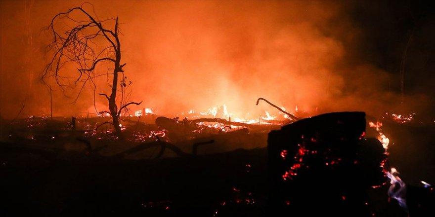 Yangın, 2 milyon hektar alanı kül etti