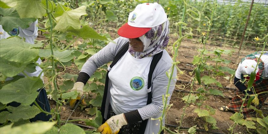 Ev kadınları belediye projeleriyle aile ekonomilerini güçlendiriyor