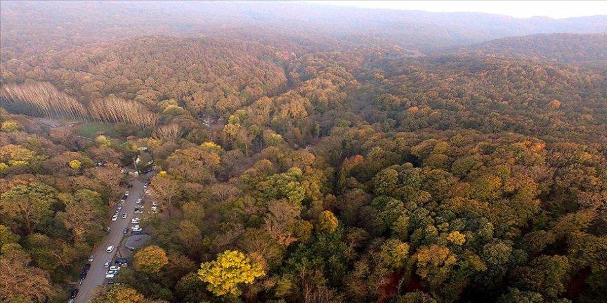 İstanbul ormanlarında 315 kaçak yapı yıkılacak