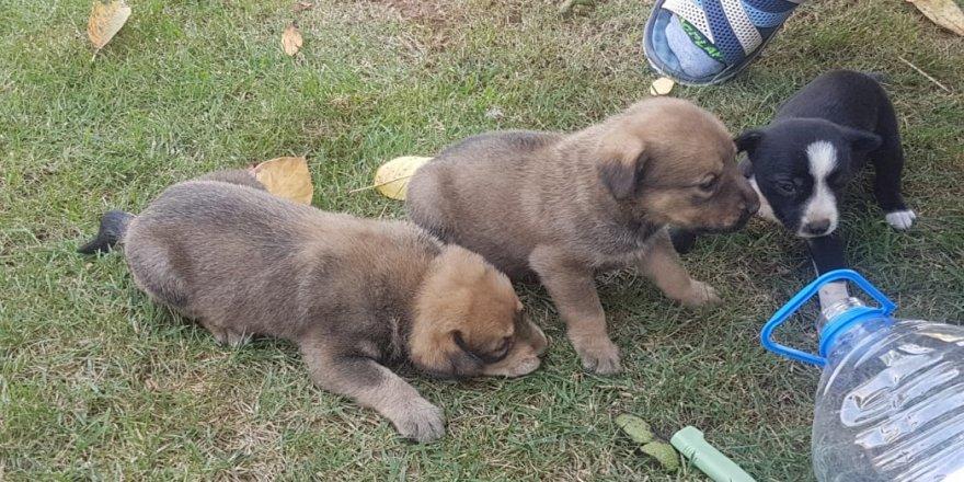 Yavru köpekler kurtarıldı