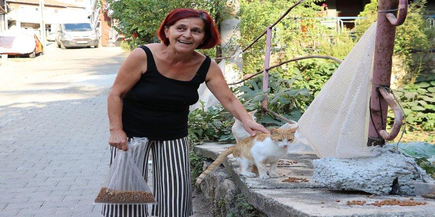 Sokak kedileri 'Sevgi' ile besleniyor