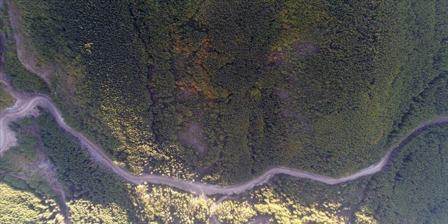 'Titrek kavak ormanları' Erciyes'e nefes oluyor
