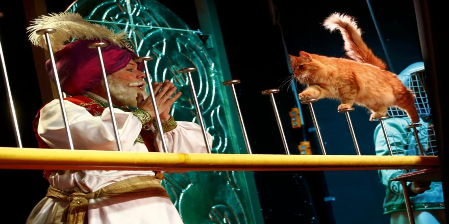 Moskova'da tiyatrocu kediler ilgi topluyor