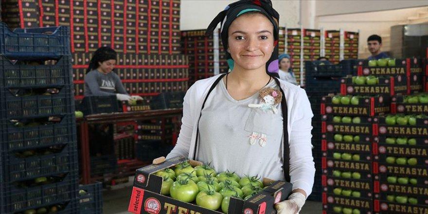 2 bin nüfuslu köyde 2 bin 500 kişiye istihdam sağlanıyor