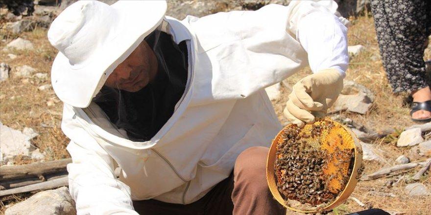 Dede mirası kara kovanlarda organik bal üretti