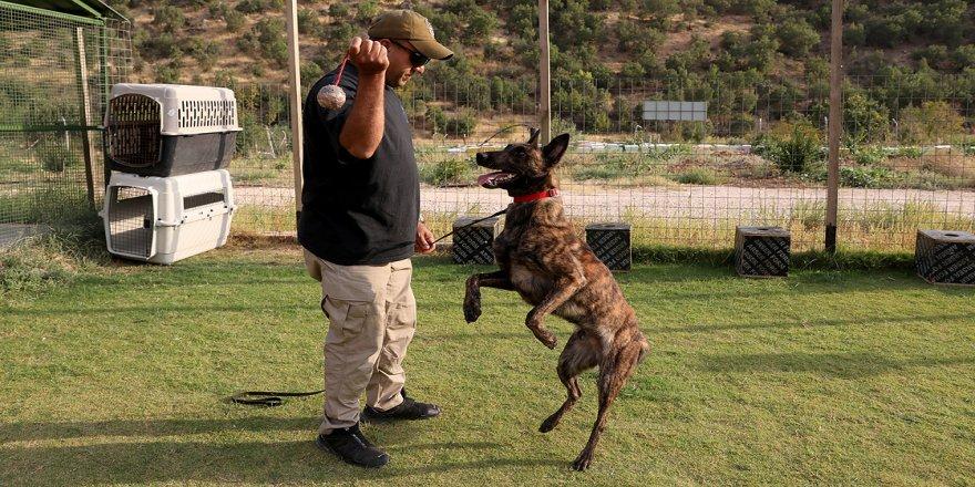 18 yılda 150 arama kurtarma köpeği yetiştirdi