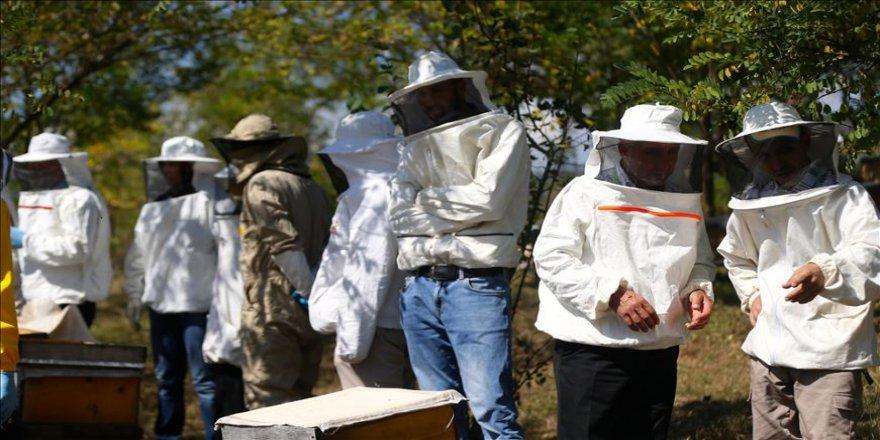 Arıcılar arı zehrine yöneldi