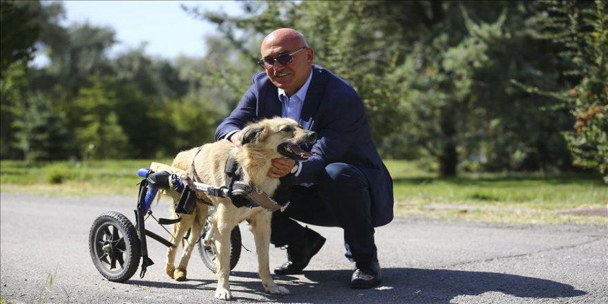 'Dost' adı verilen köpek tedavi için İstanbul'da