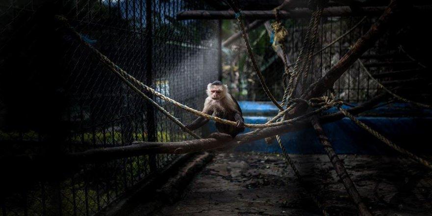 Hayvan haklarında ülkelerin karnesi zayıf