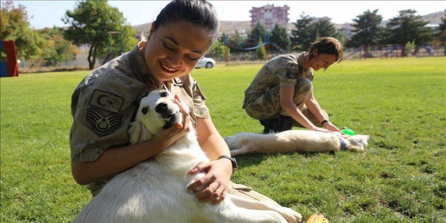 Jandarmanın 'görev ortakları' sevgiyle eğitiliyor