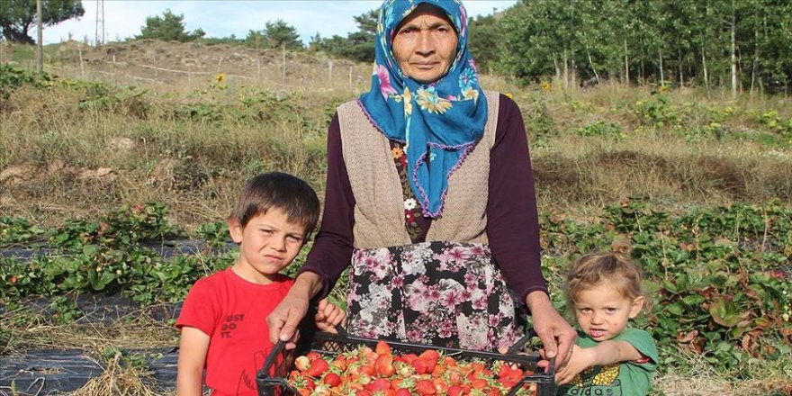 Devlet desteğiyle 60 yaşında çilek üretimine başladı