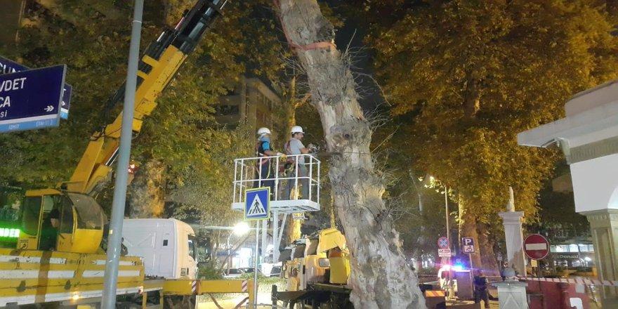 Riskli çınar ağacı kesildi