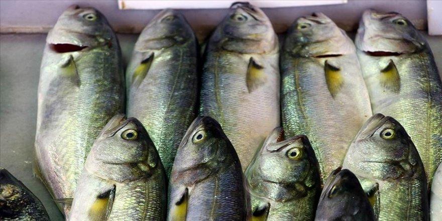 Marmara'da balıkçının yüzü gülmeye başladı