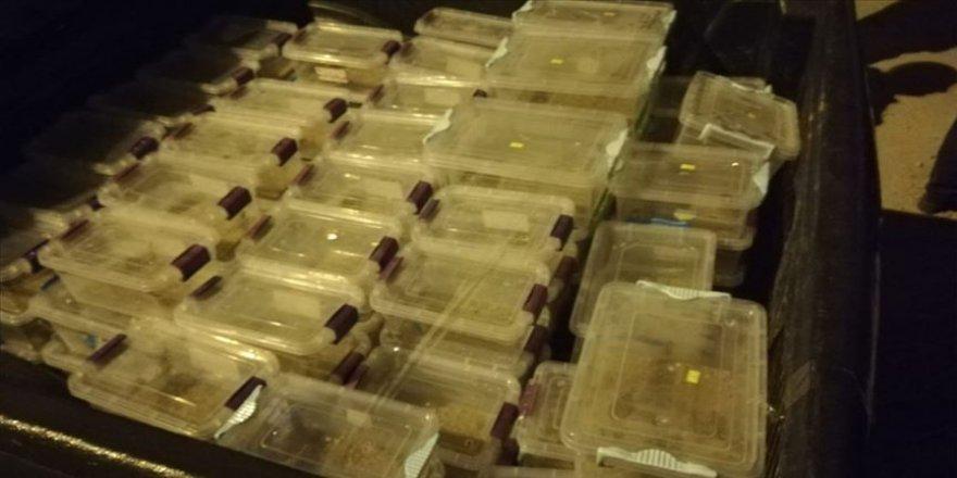 Bir evde şahsı ararken şeffaf kutularda 217 canlı akrep buldular