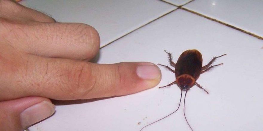 Hamam böceği ilaçlama fiyat arayanlar için en iyi 3 hamam böceği ilaçlama firmasını listeledik !