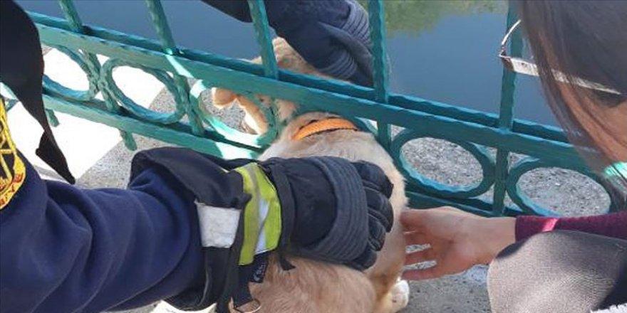 Kafası demir korkuluklara sıkışan yavru köpeği itfaiye kurtardı
