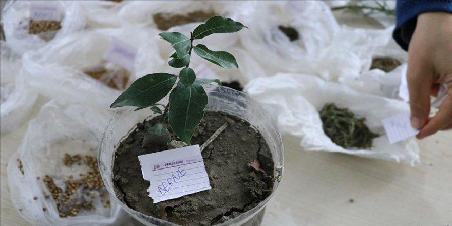 Kursiyerler ilaç ve kozmetik ürün yapımında kullanılan bitkiler yetiştiriyor