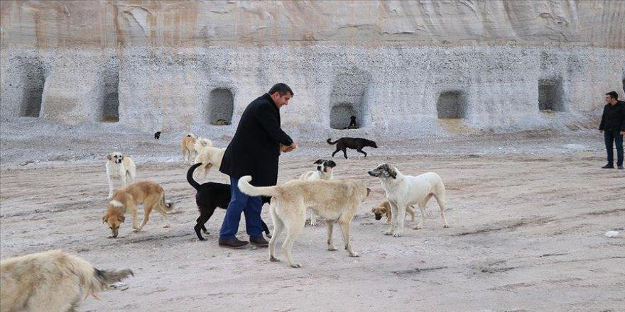 Sokak köpekleri için yamaca 'yuva' açtırdı