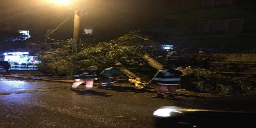 Gebze'de aşırı rüzgar ağaç devirdi