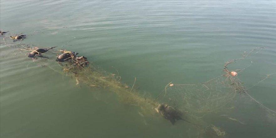 Sapanca Gölü'nde 'hayalet ağ' nedeniyle ördek ve balıkların telef olmasına inceleme
