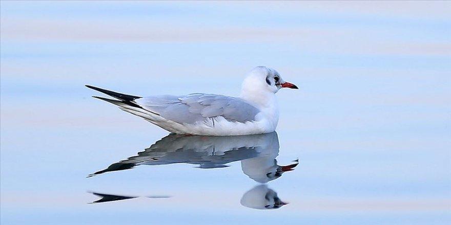Nesli tehlike altındaki kuşların uğrak mekanı: Sapanca Gölü