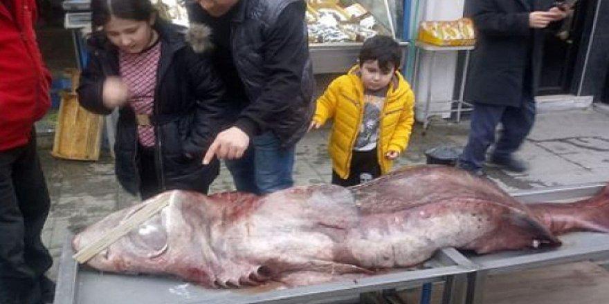 Darıca'da ki köpek balığı ilgi odağı oldu