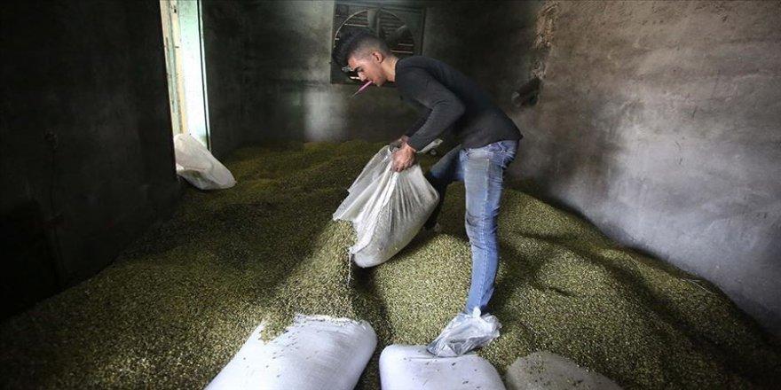 İsrail Filistin'in tarım ürünlerinin ihracatına engel oluyor