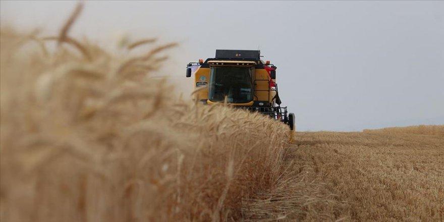 Buğday ticaretinden 17 yılda 12,5 milyar dolarlık gelir