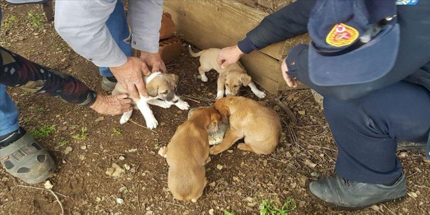 Muğla'da çukura düşen köpek yavrularını itfaiye kurtardı
