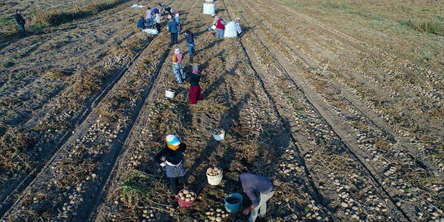 """Mevsimlik tarım işçileri için """"Kovid-19"""" tedbiri"""