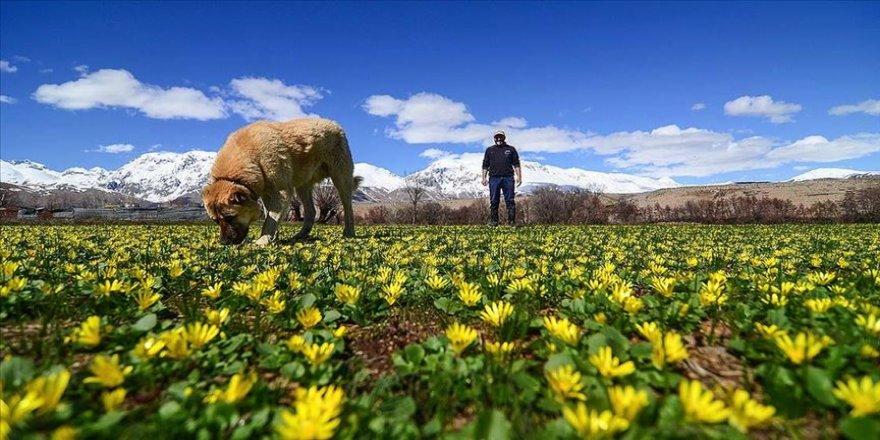 Munzur Dağları arasındaki Ovacık'ta ilkbahar güzelliği