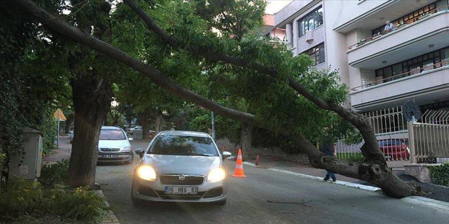 Başkentte fırtına nedeniyle ağaç devrildi