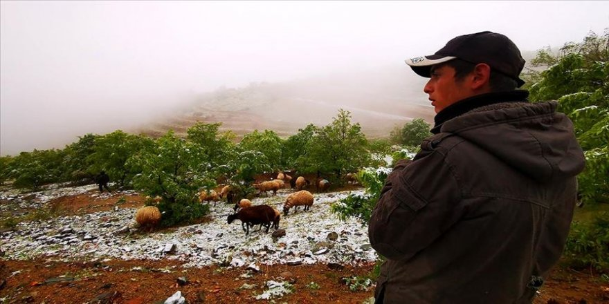Mayıs sonunda yağan kar besicileri yayladan köye döndürdü