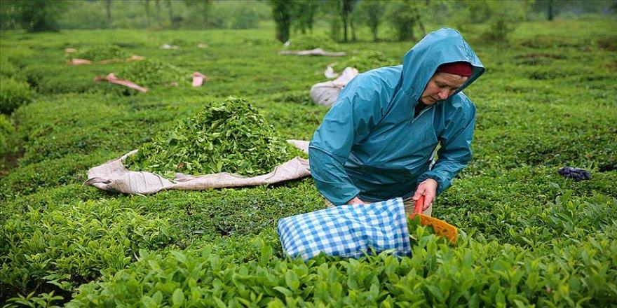 Çay üreticileri bayramı bahçelerinde çalışarak geçiriyor
