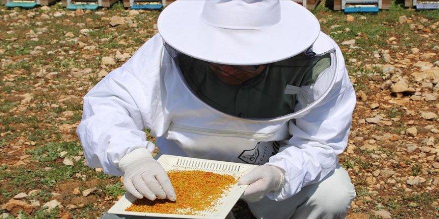 Arıcılar yılın ilk polen hasadına başladı