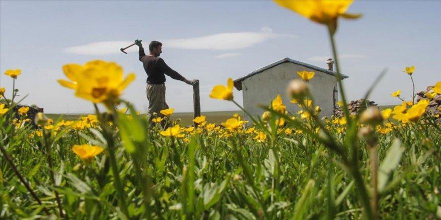 Kars'ta geçimini hayvancılıkla sağlayan köylüler, meraları daha verimli kullanabilmek için yaylalarda hazırlık yapıyor.