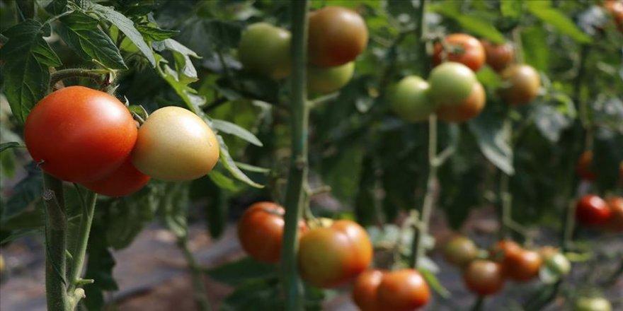 Türkiye'nin yaş meyve ve sebze ihracatında artış