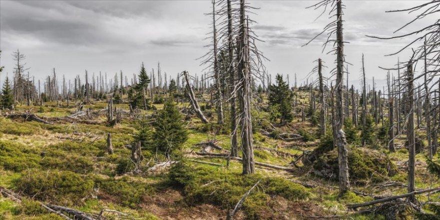 Kuraklık nedeniyle her yıl 5,2 milyon hektar orman arazisi azalıyor
