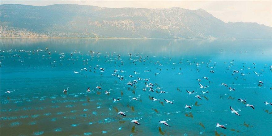 Acıgöl'de yaşayan binlerce flamingo izleyenleri büyüledi