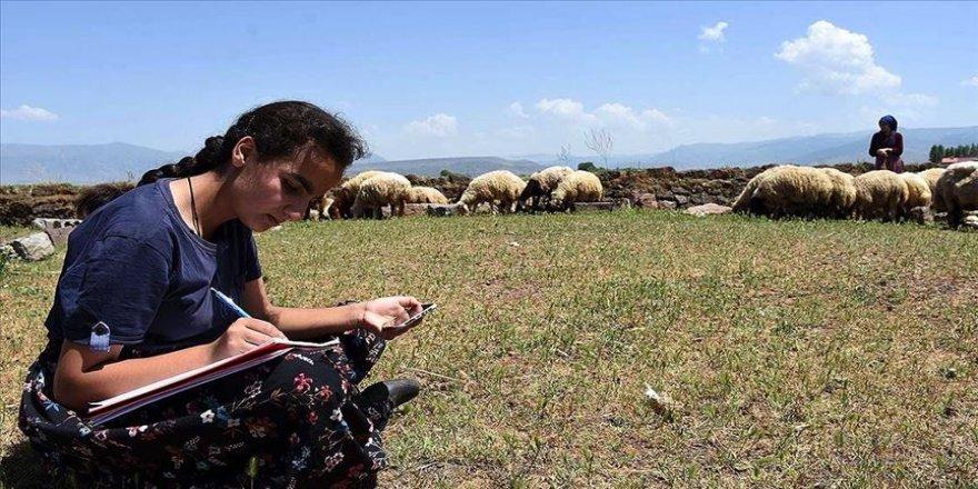 Hayvanlarını Muş Ovası'nda otlatan kız kardeşler derslerini EBA'dan takip ediyor