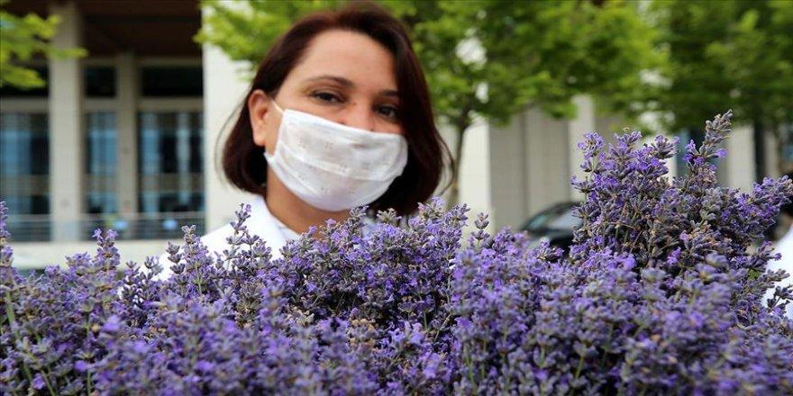 Lavantalar bahçeden sağlık çalışanları için hasat edildi