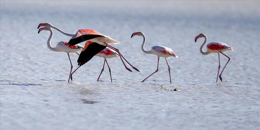 Flamingoların Yarışlı Gölü'ndeki görsel şöleni ilgi çekiyor