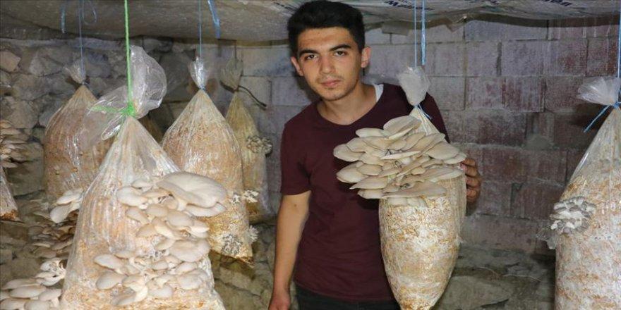 Üniversite öğrencisi Kovid-19 salgını sürecinde mantar yetiştiricisi oldu