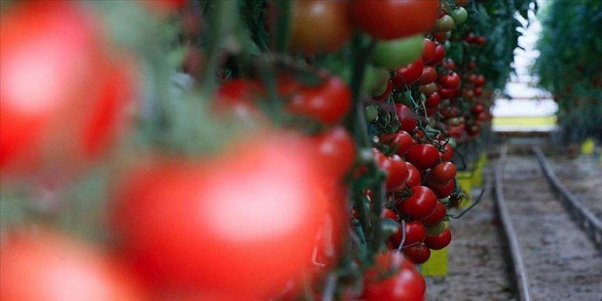 Türkiye Kovid-19 sürecinde gıdaya olan talebi avantaja çevirdi