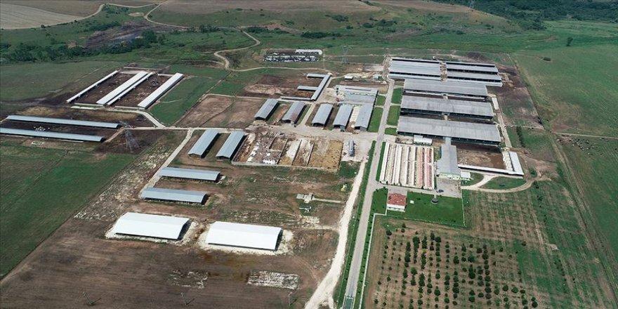 TİGEM Trakya'nın tarım ve hayvancılığına büyük katkı sağlıyor