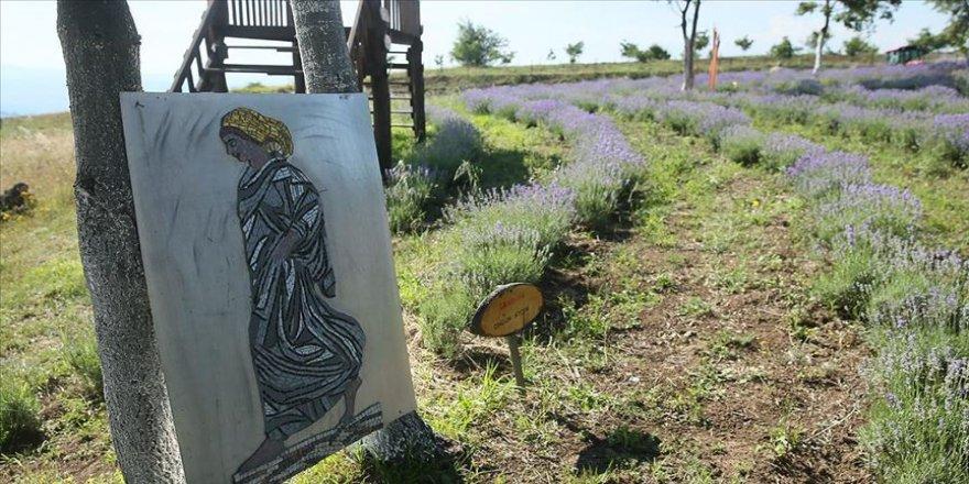 Doğa ile sanat mor tarlada buluştu