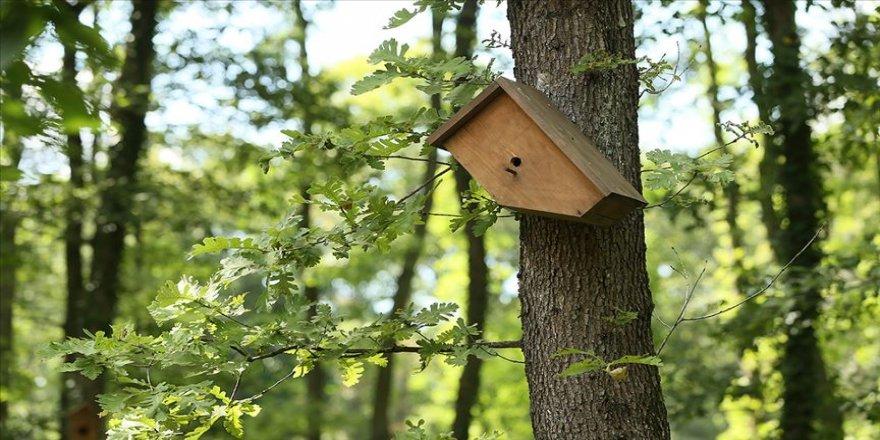Ormanya'nın kuşları 'doğa gözlemcileri'ne unutulmaz anlar yaşatıyor