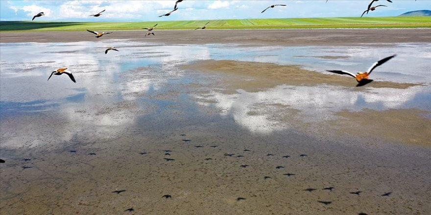 Kuşların göç rotasındaki Kuyucuk yeniden 'kuş cenneti oldu'