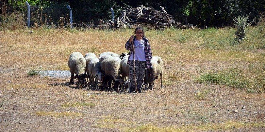 'Kitap kurdu Suzan' bir elinde kitap bir elinde değnek koyun güdüyor