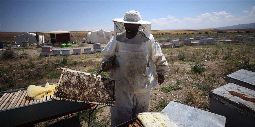 Arıları için evine 860 kilometre uzakta yaşıyor